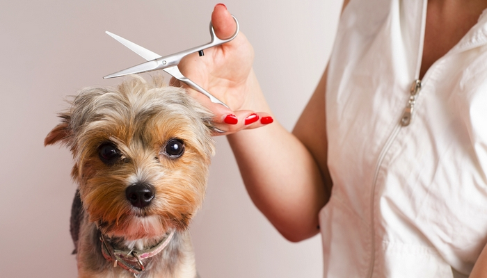 Begin your Pet Grooming Training and Career in just a few clicks